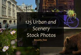 royalty-free stock photos